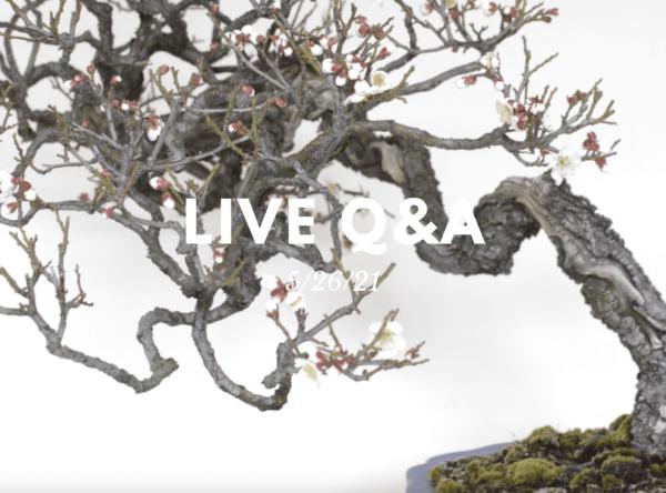 Bonsai-U Live Q&A session held on 5/26/21
