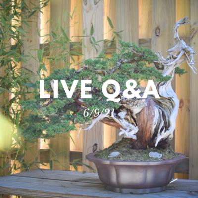 Bonsai-U Live Q&A session held on 6/9/21