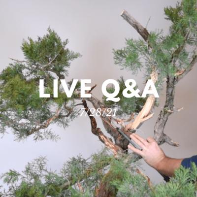 Bonsai-U Live Q&A 7/28/21
