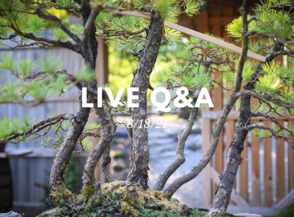 Bonsai-U Live Q&A August 18, 2021