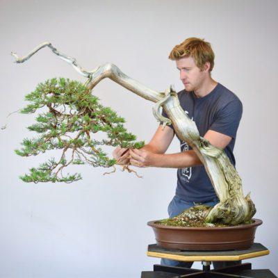 Bjorn Bjorholm restyling a Rocky Mountain Juniper